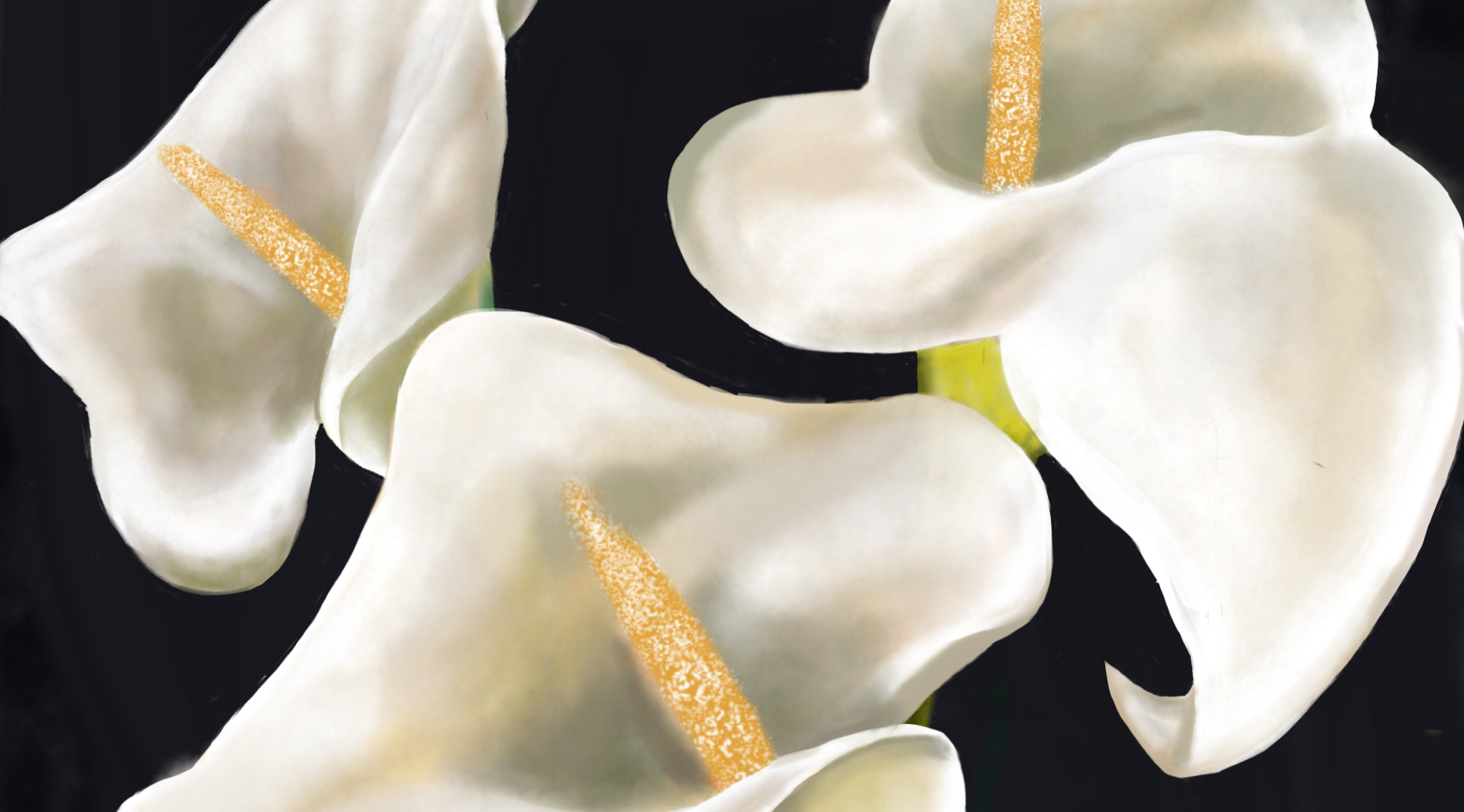 Calla Lilies — A Small Remembrance of Things Past