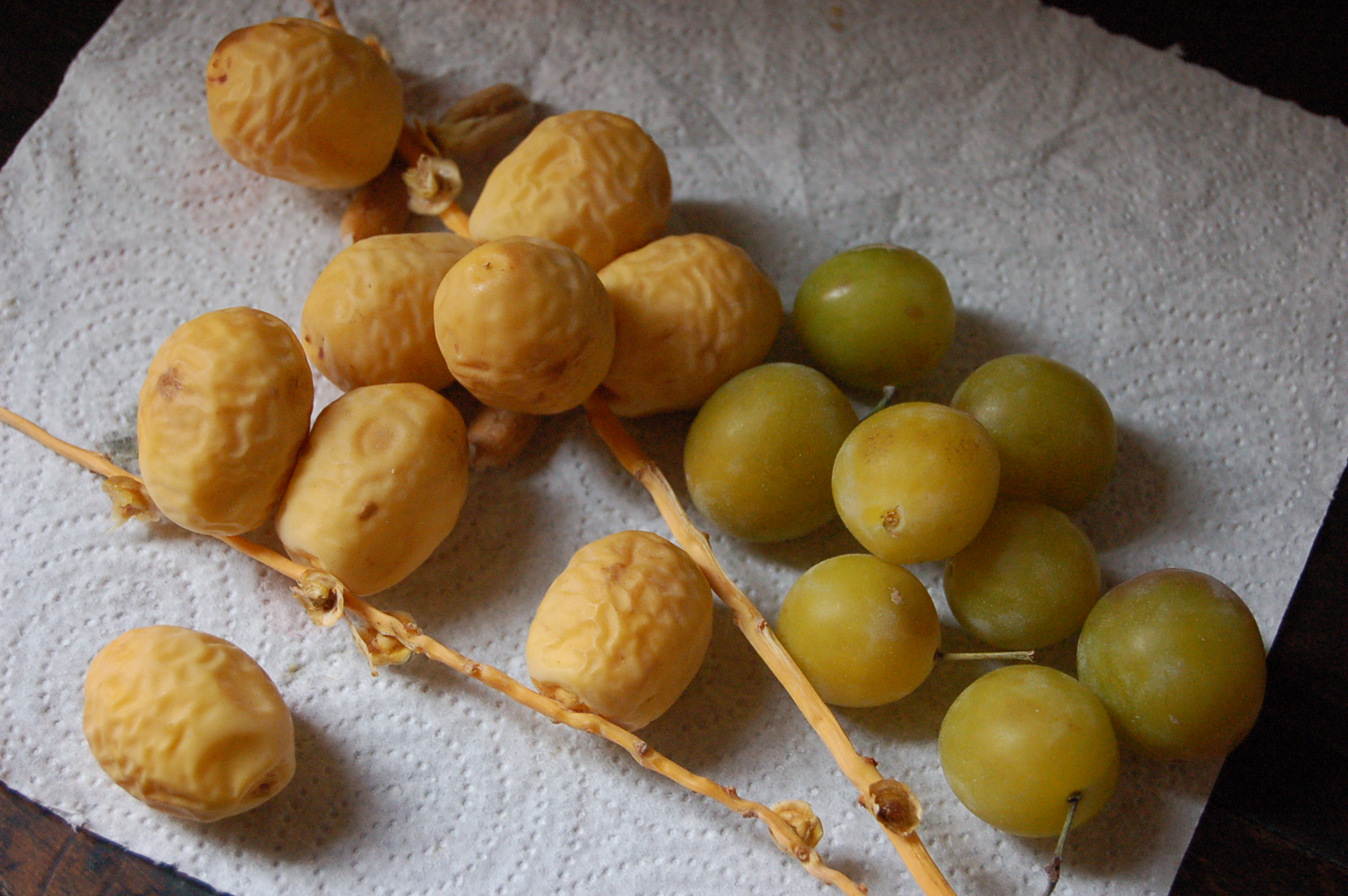 fresh dates and mirabelles
